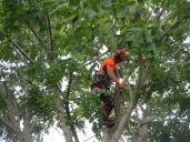 Arborist börjar i Valnöten